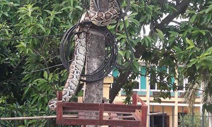 Trần Khôn, sao Hoa ngữ, con trai Trần Khôn
