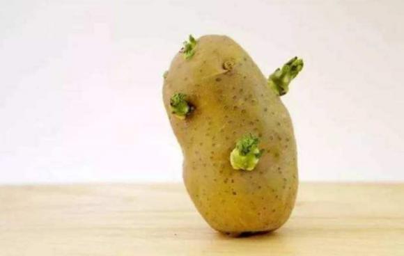 Đã ăn khoai tây, tốt nhất không chạm vào 3 thực phẩm này nếu không muốn rước họa vào thân