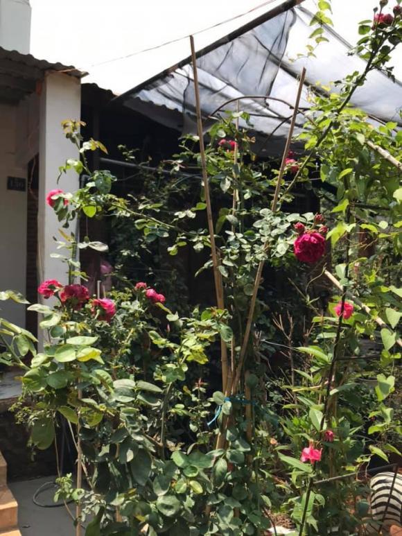 Kiều Trinh, nữ hoàng cảnh nóng Kiều Trinh, nhà Kiều Trinh, vườn Kiều Trinh, khu vườn Kiều Trinh, nhà sao việt