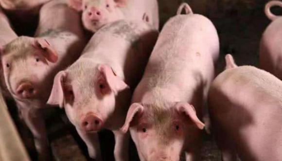 bộ phận bẩn nhất của lợn, không nên ăn cổ lợn, phần nào của lợn không thể ăn