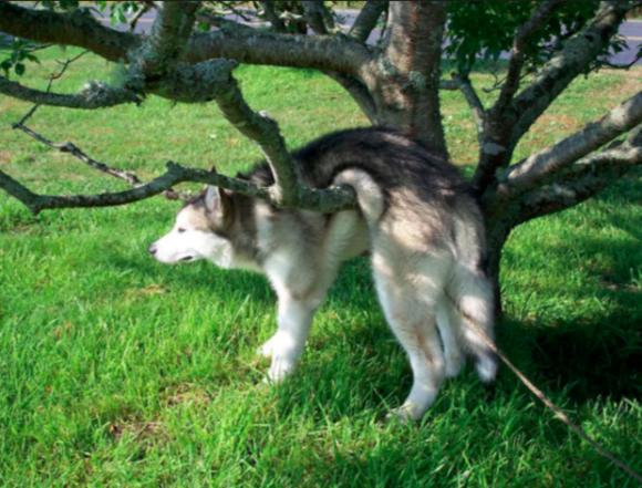 chú chó ngốc nghếch, chú chó thích leo trèo, chú có trèo cột điện