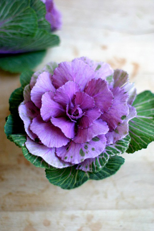 Hoa đẹp 20-10: Lạ mắt 2 mẫu cắm hoa Bắp cải - 1