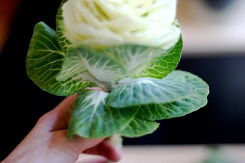Hoa đẹp 20-10: Lạ mắt 2 mẫu cắm hoa Bắp cải