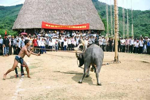 """Những lễ hội """"dựng tóc gáy"""" chỉ có ở Việt Nam, Phi thường - kỳ quặc, chuyen la viet nam, chuyen la le hoi, le hoi chem lon, le hoi dam trau, tin tuc"""