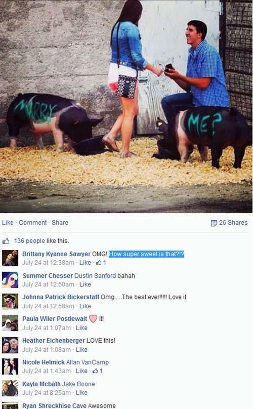 Dân mạng thế giới xôn xao bức ảnh chàng trai nhờ… lợn cầu hôn