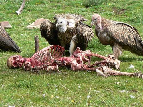 Những hủ tục mai táng người chết rùng rợn nhất thế giới