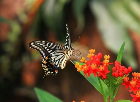 Ngắm cuộc sống sôi động đầy sắc màu của thế giới côn trùng