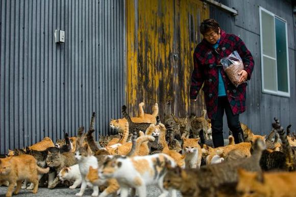 """Hòn đảo Aoshima được bảo vệ bởi """"quân đội mèo"""" 0"""