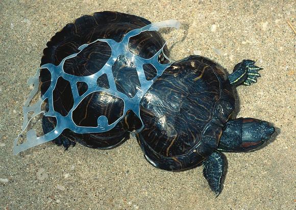 ô nhiễm môi trường  8