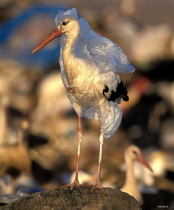 ô nhiễm môi trường  7