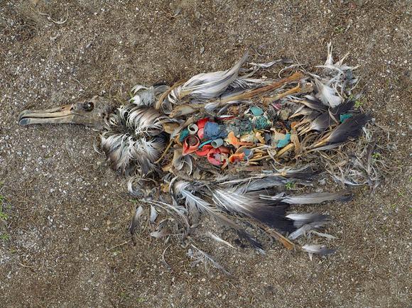 ô nhiễm môi trường  15