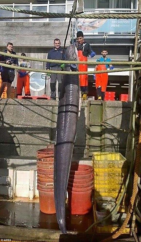 Bắt được con lươn khổng lồ dài hơn 6m ở Anh