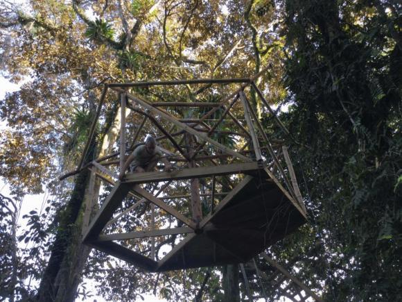 nhà trên cây,nhà trên cây độc đáo,nhà lửng lơ trên cây