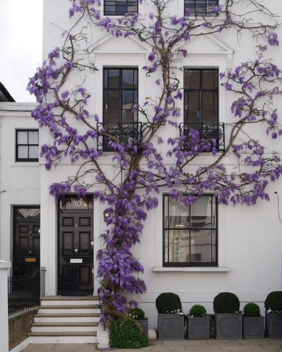 Những ngôi nhà cây tuyệt đẹp trên khắp thế giới
