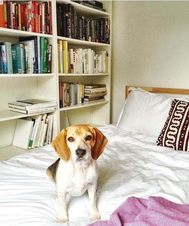 Công nương Anh,Meghan Markle,phòng ngủ của Meghan Markle